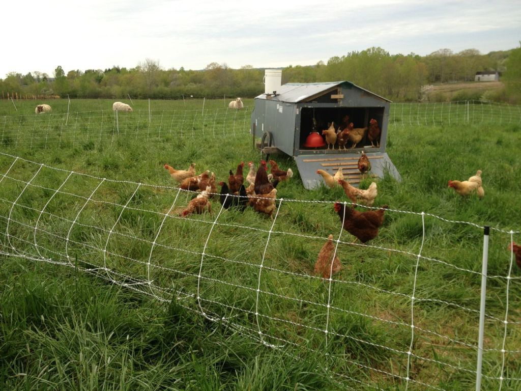 Mobile Chicken Coop Heliotrust