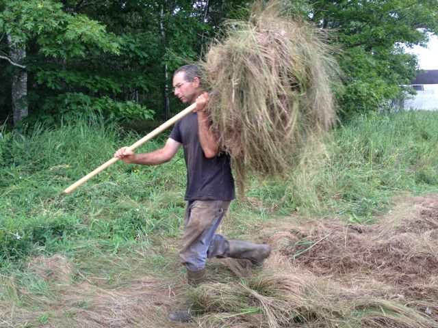 David loading salt marsh hay on to the trailer.