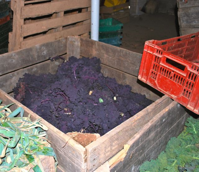 Purple and green kale in apple bins