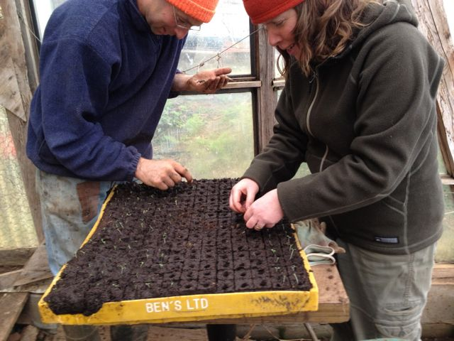 David Greenberg and Kate Babcock planting out potato seedlings into soil blocks, May 2012.